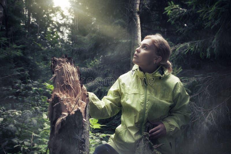 I skog arkivfoto