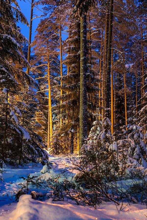 I skogen på natten i vintern fotografering för bildbyråer