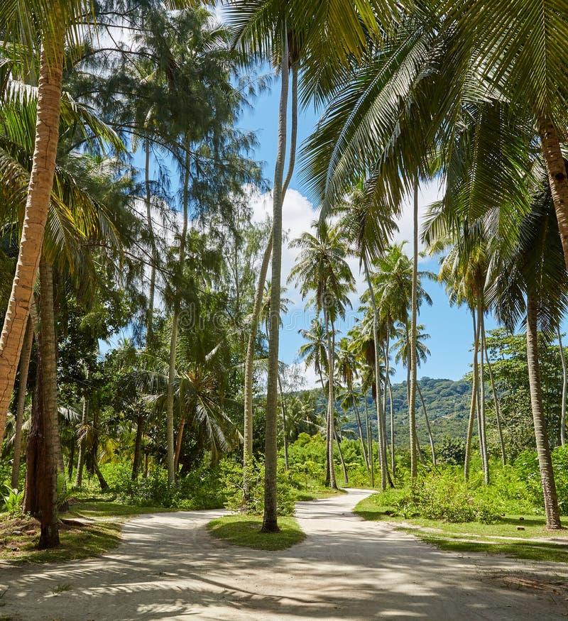 I skuggan av högväxta palmträd Seychellerna royaltyfria bilder