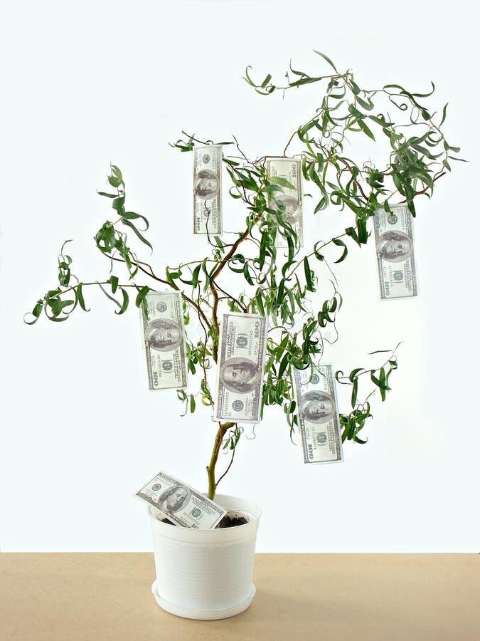 I soldi si sviluppano sugli alberi fotografie stock