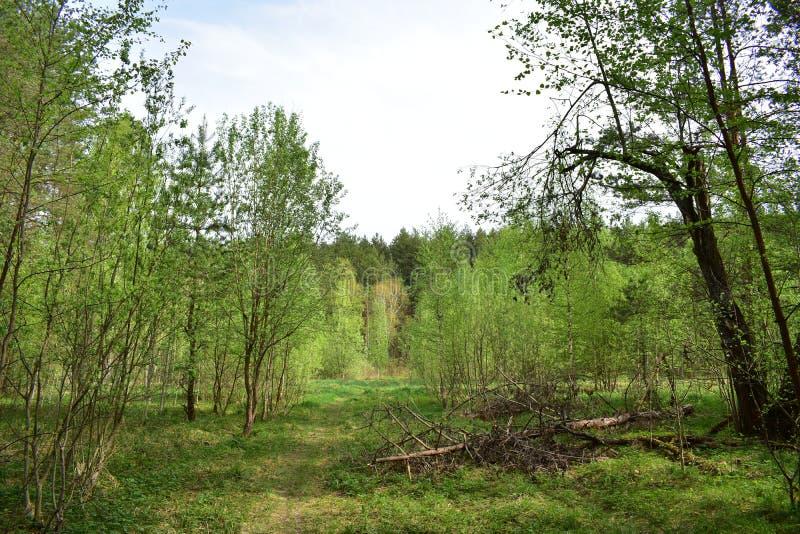 I sommartid i skogen ?r v?rde det verkligt n?den royaltyfri fotografi