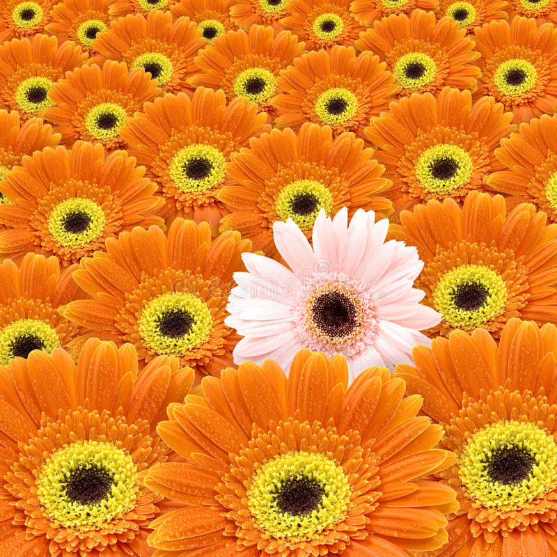 Download I am special stock photo. Image of difference, floral - 3454612