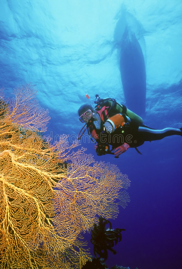 Download I Spy Something Yellow stock photo. Image of south, coral - 103974