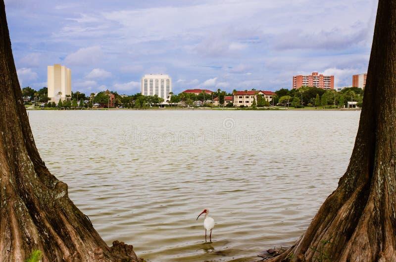 I stadens centrum Lakeland, Florida, från sjön Morton fotografering för bildbyråer
