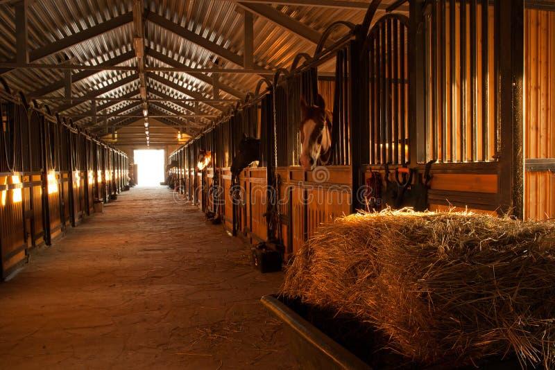 I stallet med hästar arkivbilder