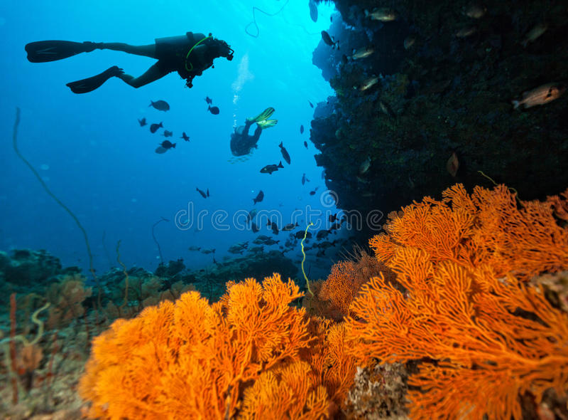 I subaquei esplorano una barriera corallina fotografia stock