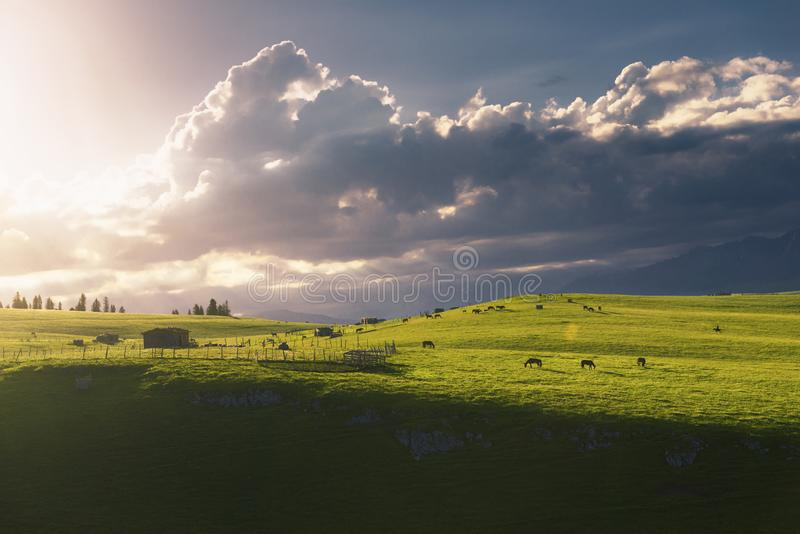 Quiet pastures in the morning royalty free stock photography