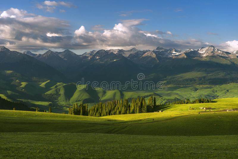 Quiet pastures in the morning royalty free stock photo