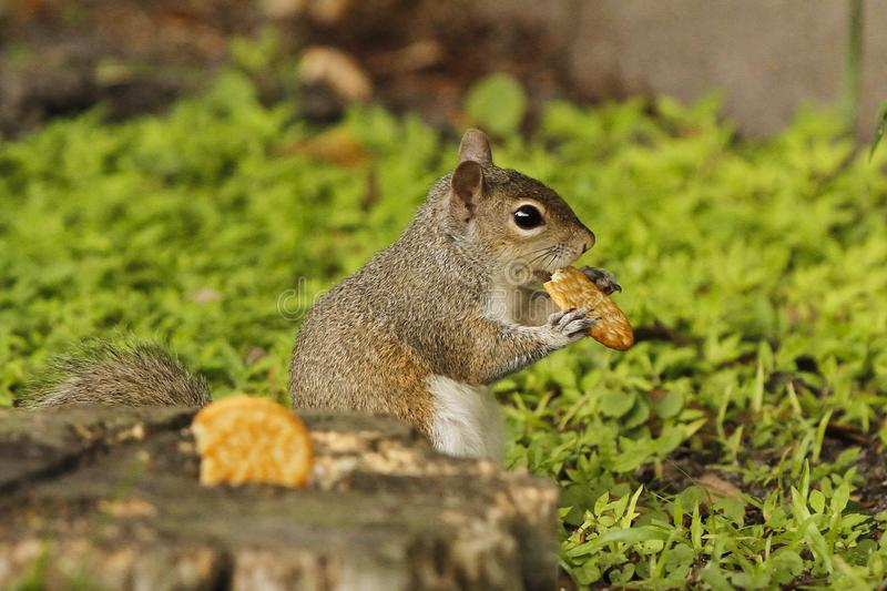 I think someone is hungry royalty free stock photo