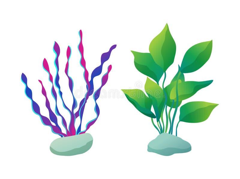 I tipi dell'alga hanno messo le piante, illustrazione di vettore illustrazione di stock