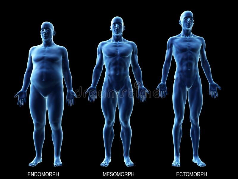 I tipi di corpo maschio illustrazione di stock