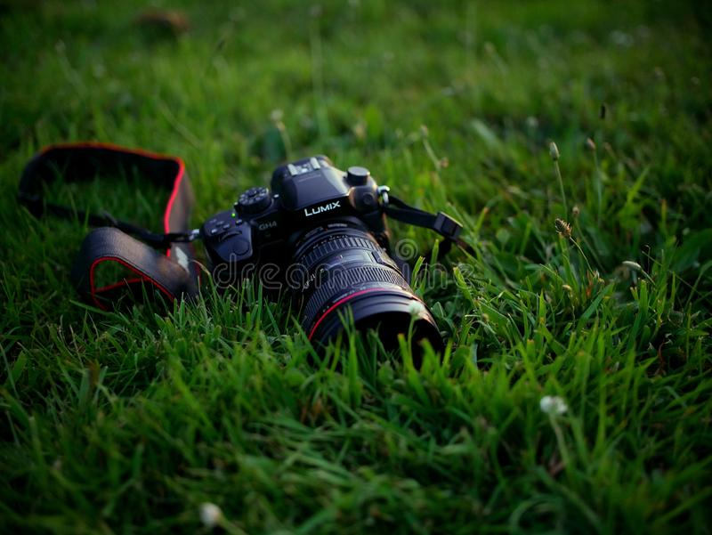 Lumix GH4 sitting in the grass. I took this of my friends Panasonic Lumix GH4 with a metabones adapter on it in the grass in front of a cow farm at sunset royalty free stock image