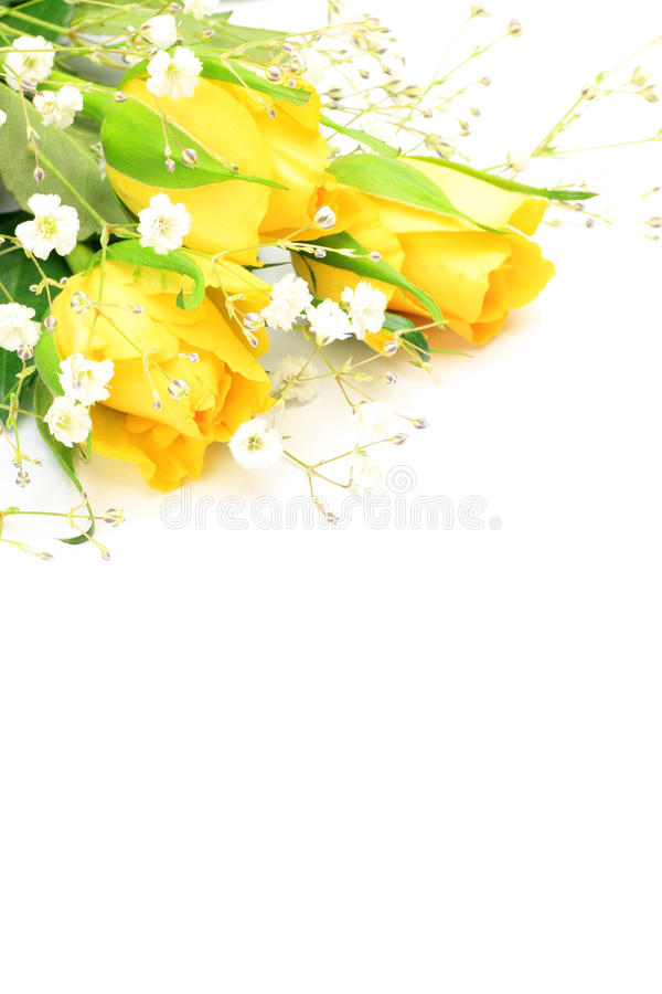 Download Yellow rose and haze grass stock photo. Image of background - 29868648