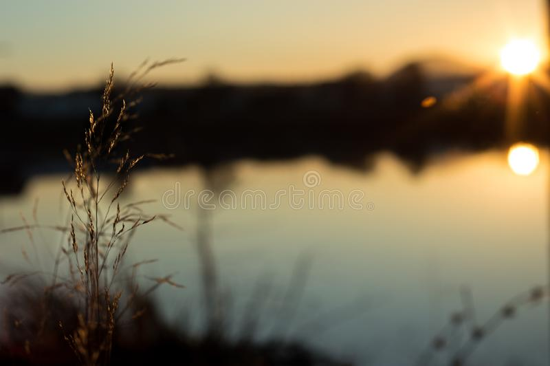 Plant rising from the ground in a sunset royalty free stock image