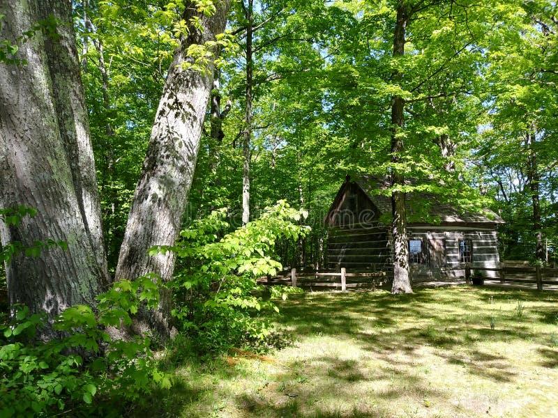 I tronchi del nord della cabina lascia i rami di albero di legni della foresta immagine stock