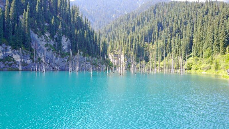 I tronchi della conifera aumentano dalle profondità di un lago della montagna con acqua blu fotografia stock