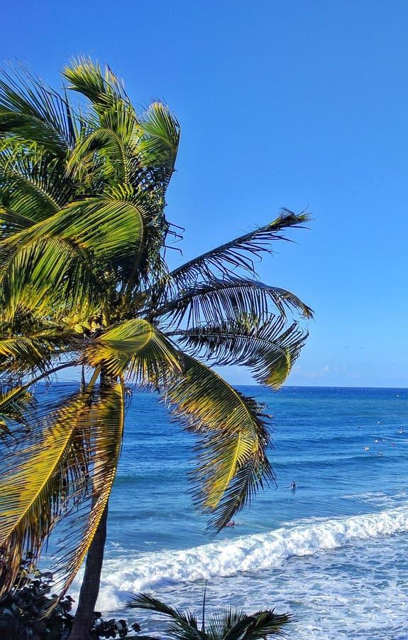 I tropici fotografia stock libera da diritti