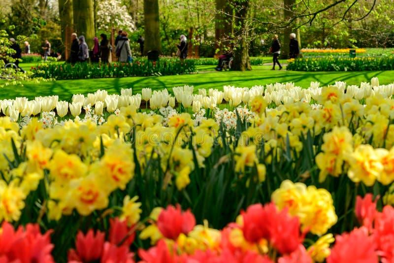 I tulipani di Multicolours si chiudono su in Olanda, fiori di tempo di molla in Keukenhof fotografia stock