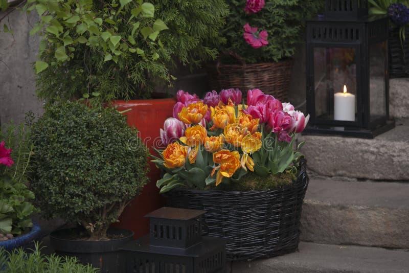 I tulipani freschi all'entrata al ristorante sul quadrato del mercato nella vecchia città a Varsavia fotografia stock