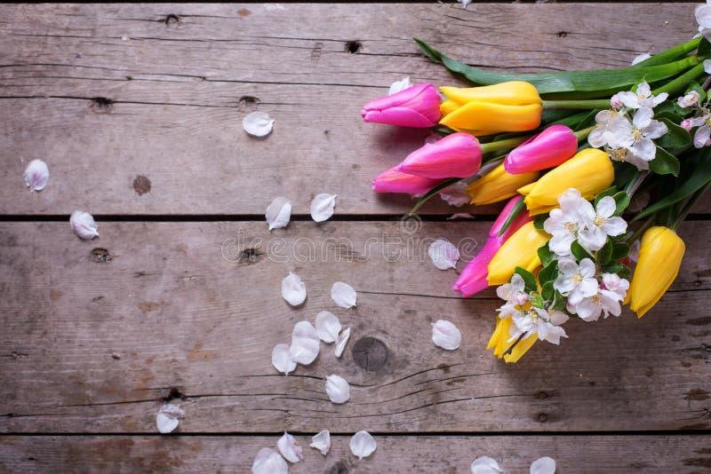 I tulipani luminosi della molla e di melo gialli e rosa fiorisce sopra fotografia stock