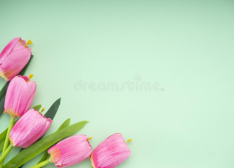 I tulipani rosa il fondo del Libro Verde immagine stock