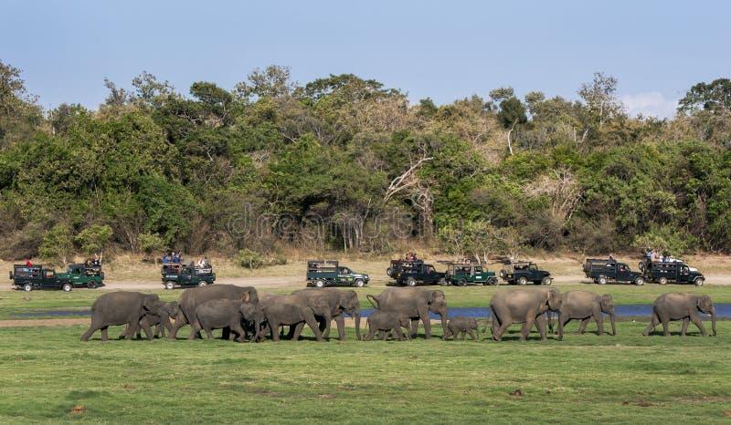 I turisti a bordo di una flotta delle jeep di safari guardano un gregge degli elefanti selvaggi che si dirigono verso una bevanda immagine stock