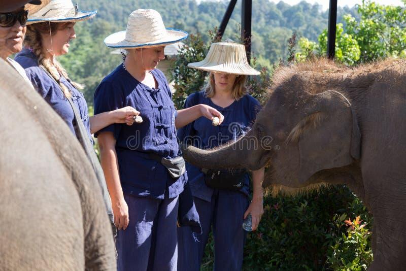 i turisti stanno alimentando la banana al giovane elefante asiatico fotografia stock