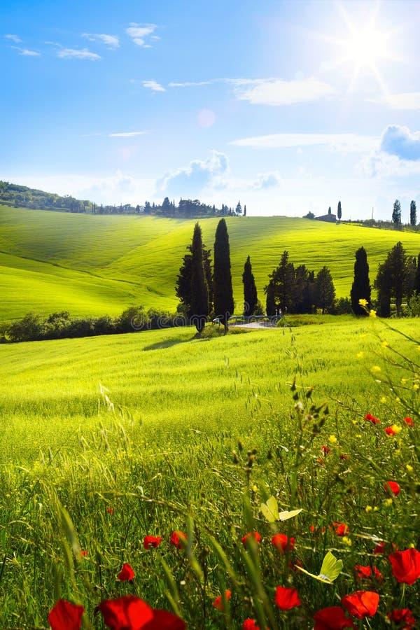By i tuscany; Italien bygdlandskap med röd vallmo f royaltyfria bilder