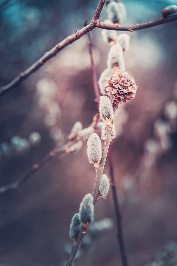 I våren pil royaltyfri foto