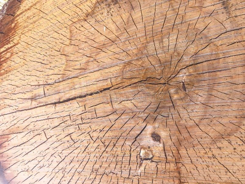 I vari tronchi di albero del taglio di dimensione registra la pila della legna da ardere del corpo nell'area di disboscamento del fotografia stock libera da diritti