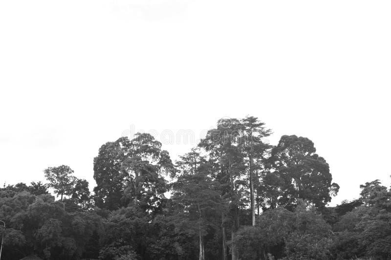 I vecchi alberi fotografia stock