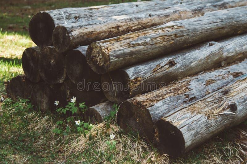 I vecchi tronchi di albero tagliati si trovano sopra a vicenda contro lo sfondo dell'erba fotografie stock