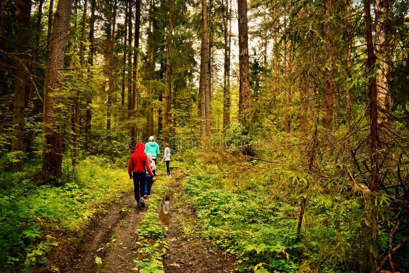 I viaggiatori vanno nella foresta verde sul sentiero per pedoni sull'estate fotografia stock