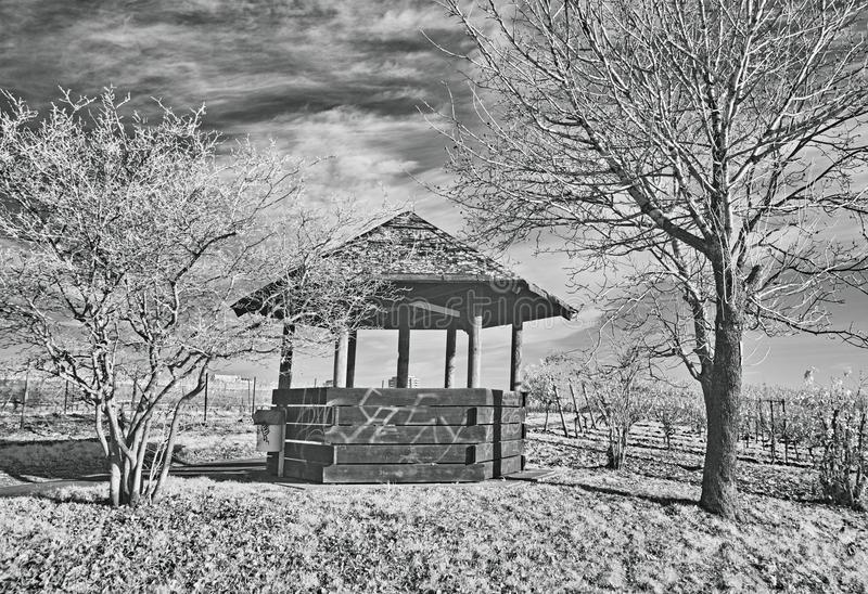 I vingården arkivfoto