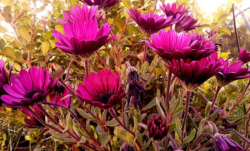 I violet arkivfoton