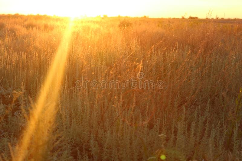 Beautiful summer field at evening with sun through it stock images