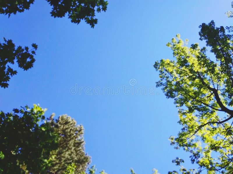 Looking at the sky on a springtime day. stock photography
