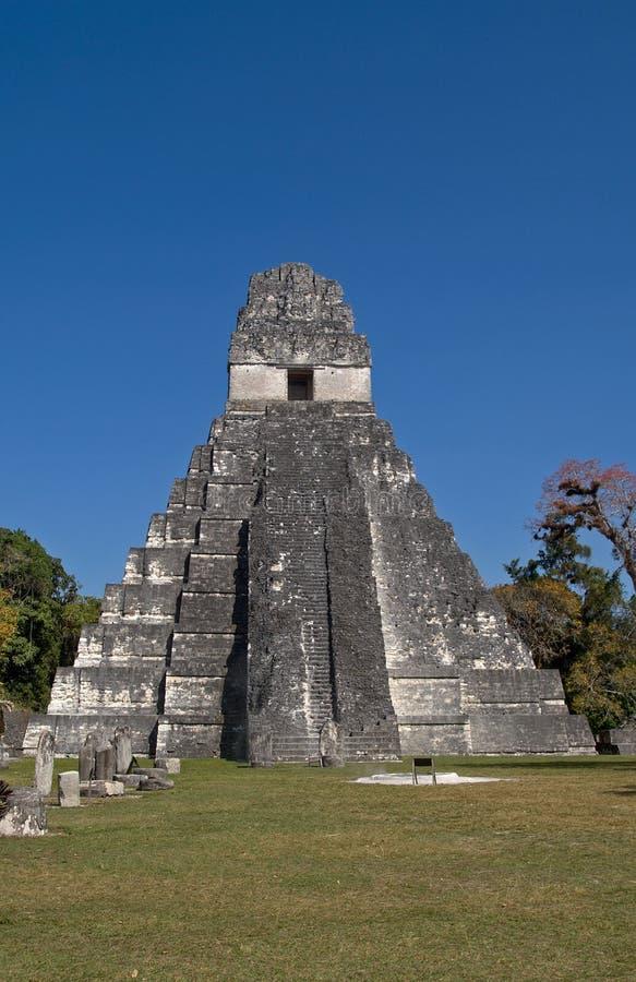 i wielki jaguar peten świątynię tikal obrazy royalty free