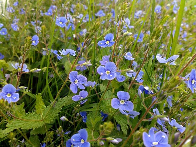 I Wildflowers è una parte di wonderfool della natura fotografia stock