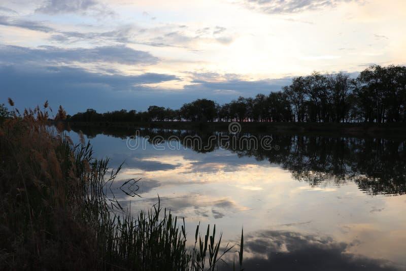 I Wildflowers abbelliscono marittimo-fluviale felice fotografia stock