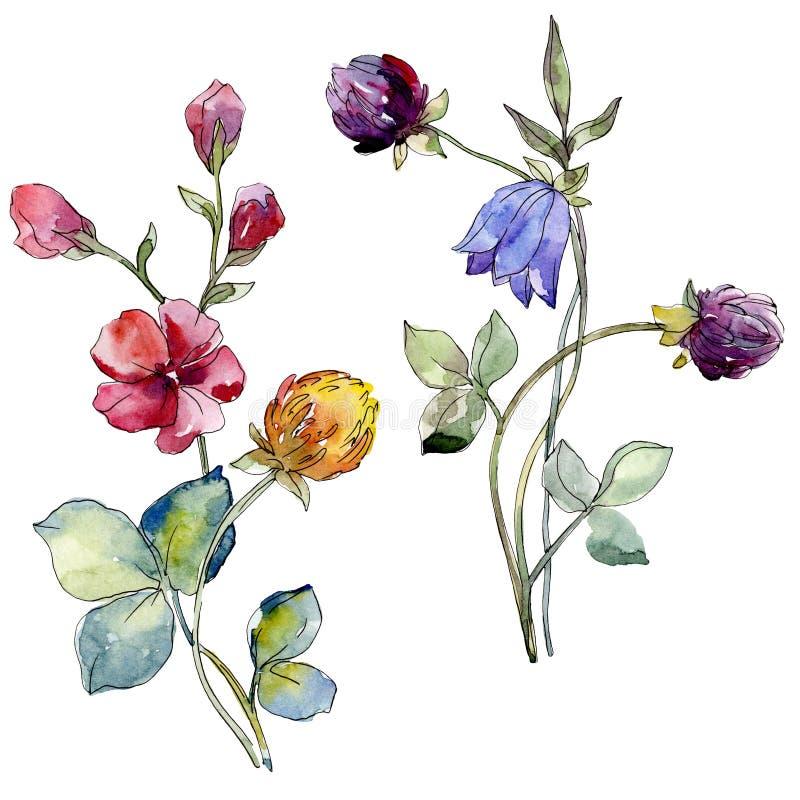 I Wildflowers stampano il fiore botanico floreale Insieme della priorità bassa dell'acquerello Elemento isolato dell'illustrazion royalty illustrazione gratis
