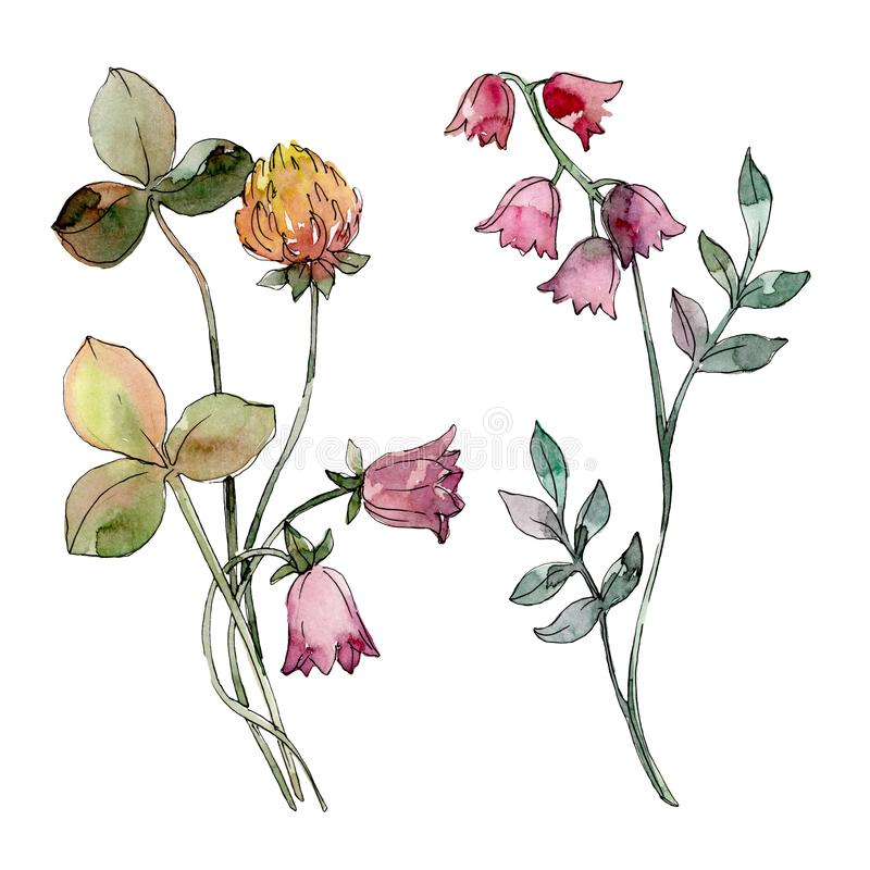 I Wildflowers stampano il fiore botanico floreale Insieme della priorità bassa dell'acquerello Elemento isolato dell'illustrazion illustrazione di stock
