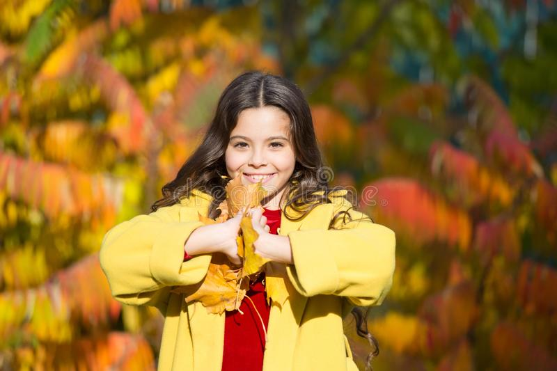 I would stay here forever. fallen leaves in forest. autumn nature. school season fashion. happy small kid outdoor. girl royalty free stock images