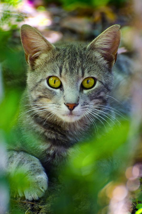 I am a young cat lying in the bushes stock photo