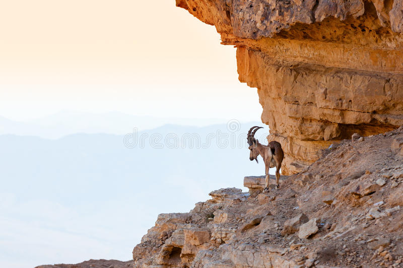 Download Ibex stock photo. Image of middle, haze, mountains, looking - 30916444