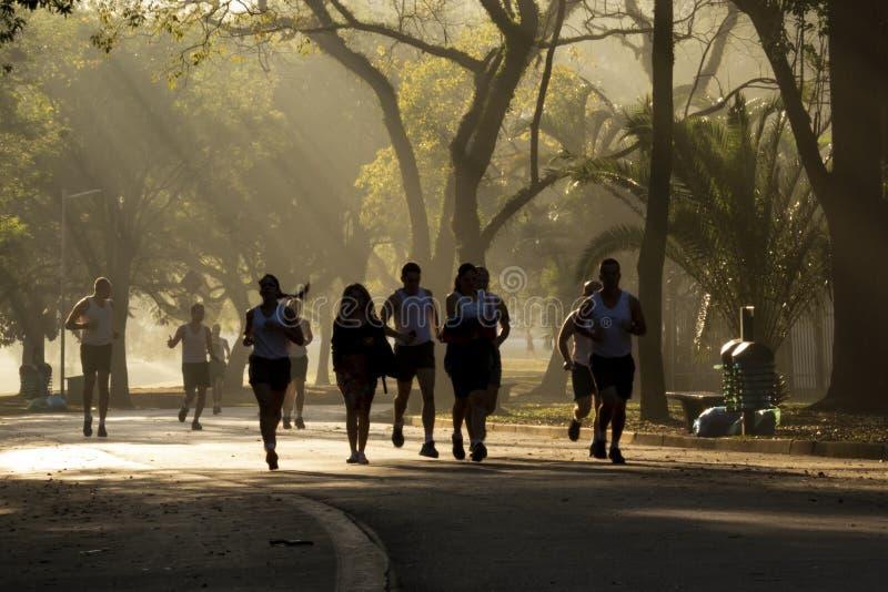 Ibirapuera parkerar arkivbilder