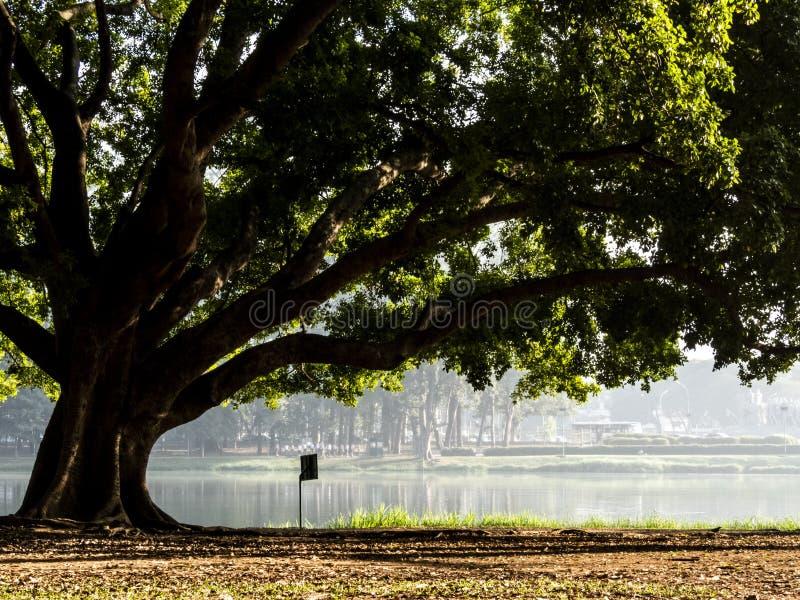 Ibirapuera parkerar fotografering för bildbyråer