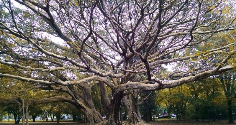 Ibirapuera& x27; s公园 图库摄影