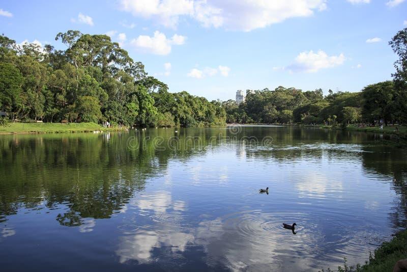 Ibirapuerapark, Sao Paulo, Brazilië stock foto's
