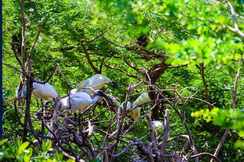 Ibis en la rama fotografía de archivo libre de regalías